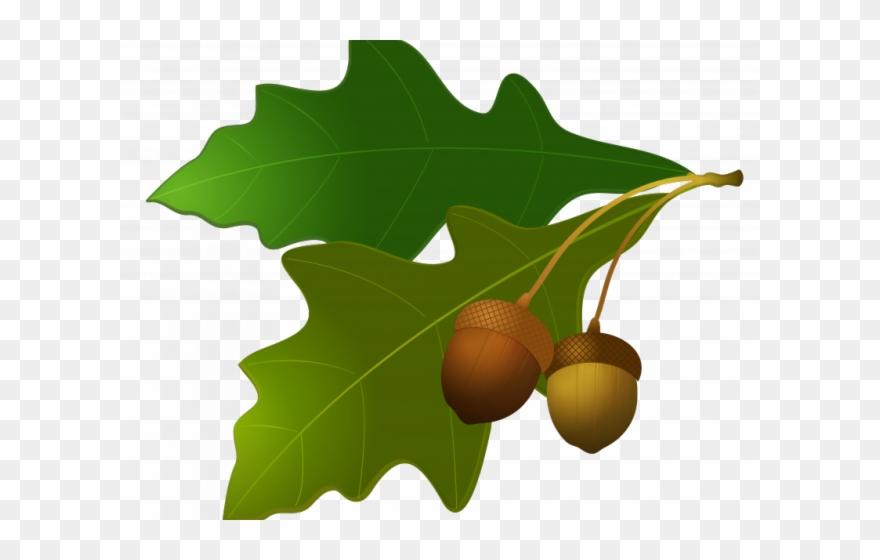 Harvest clipart oak leaves. Acorn png download pinclipart