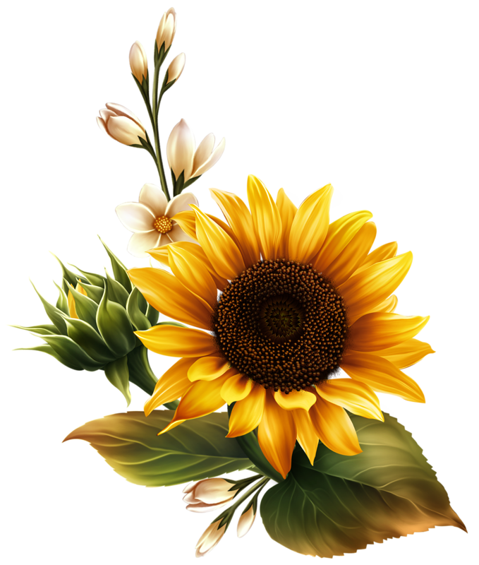 Harvest clipart sunflower. Image du blog zezete
