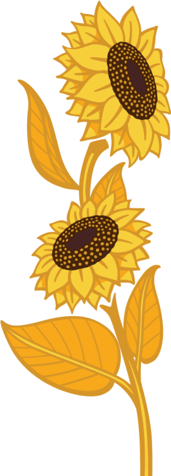 Flax country chsunflowerflaxdfacehr. Harvest clipart sunflower