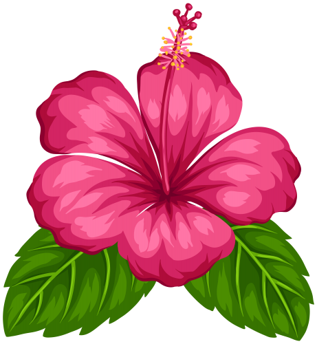 Hawaiian aloha tropical pinterest. Hawaii flower png
