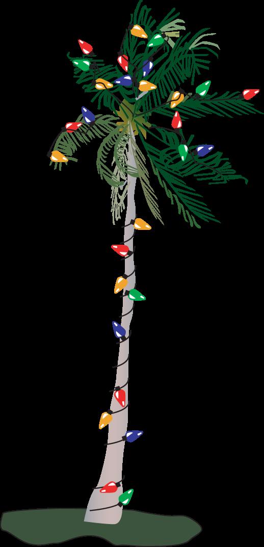 Palm trees collection pics. Hawaiian clipart christmas