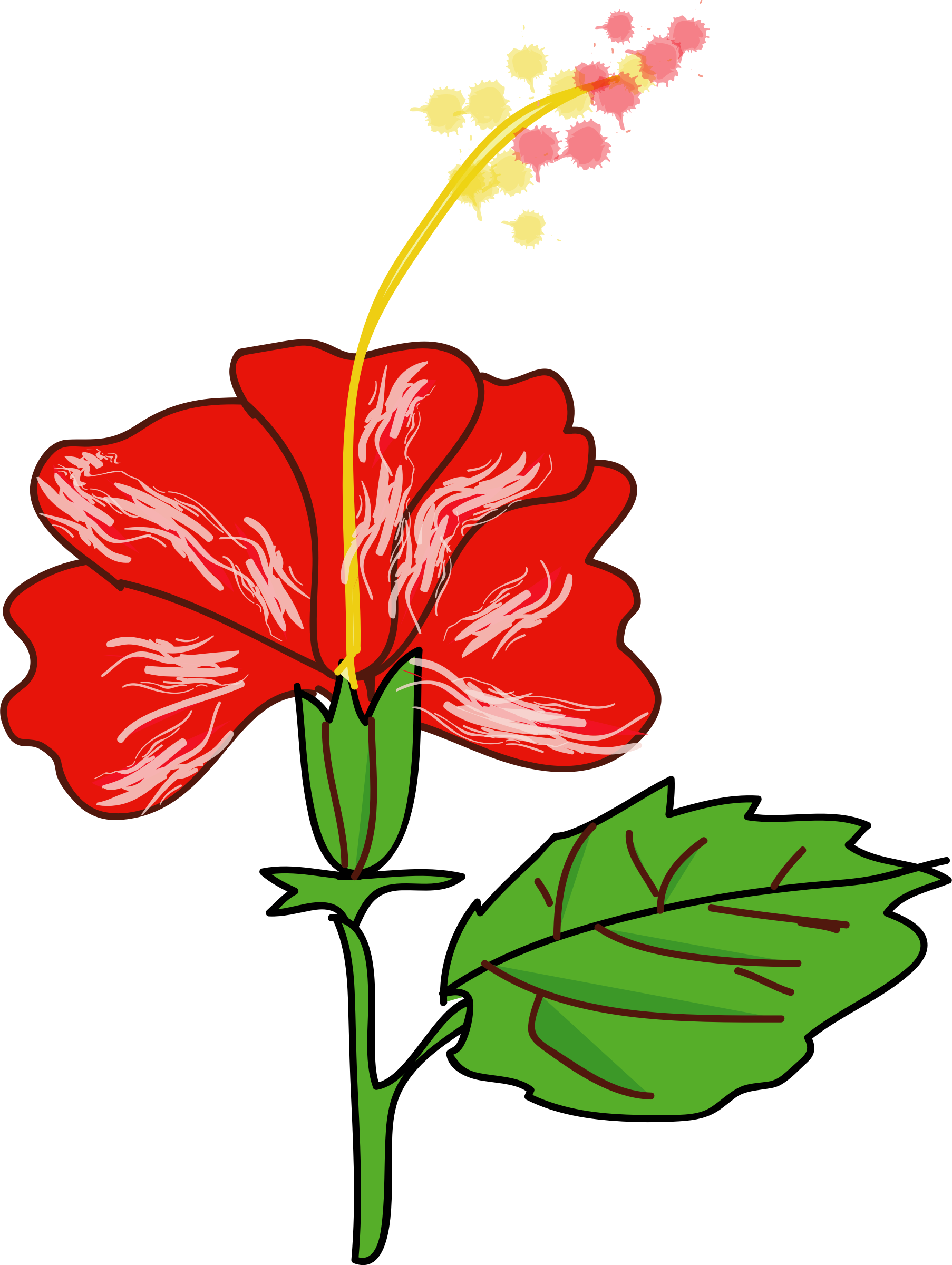 Hibiscus clipart flower real. Big image png
