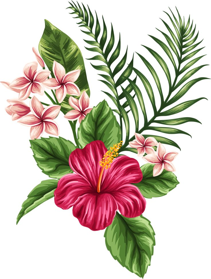 Hibiscus clipart tropical vine. Flower crown free download