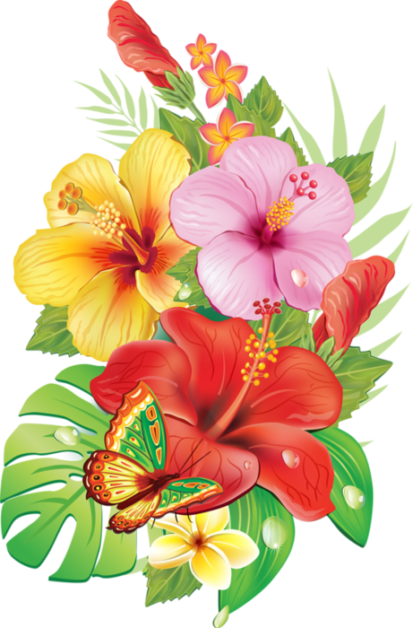 Argentina hawaiian free on. Hibiscus clipart colorful flower