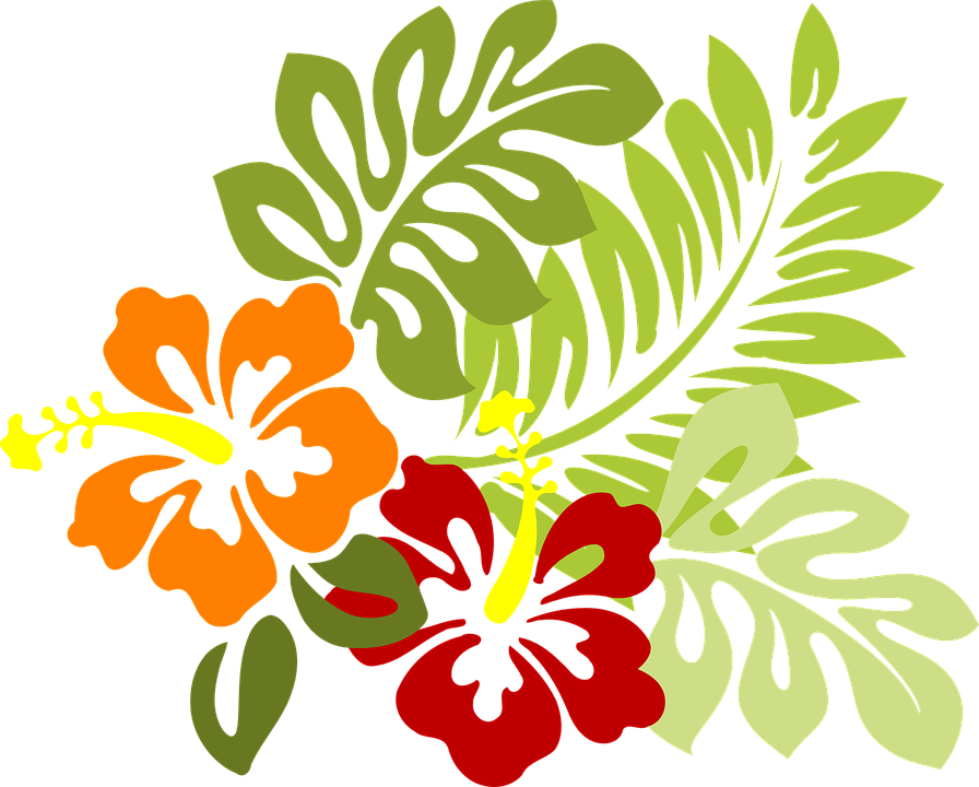 Hawaiian clipart leaf. Hibiscus png transparent images