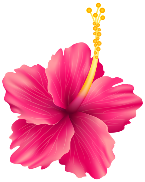 Hawaiian flower png.  flowers for free