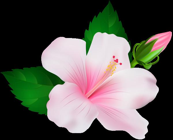Hibiscus clip art image. Hawaiian flower png