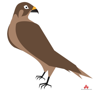 Free images at clker. Hawk clipart