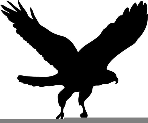 Black free images at. Hawk clipart