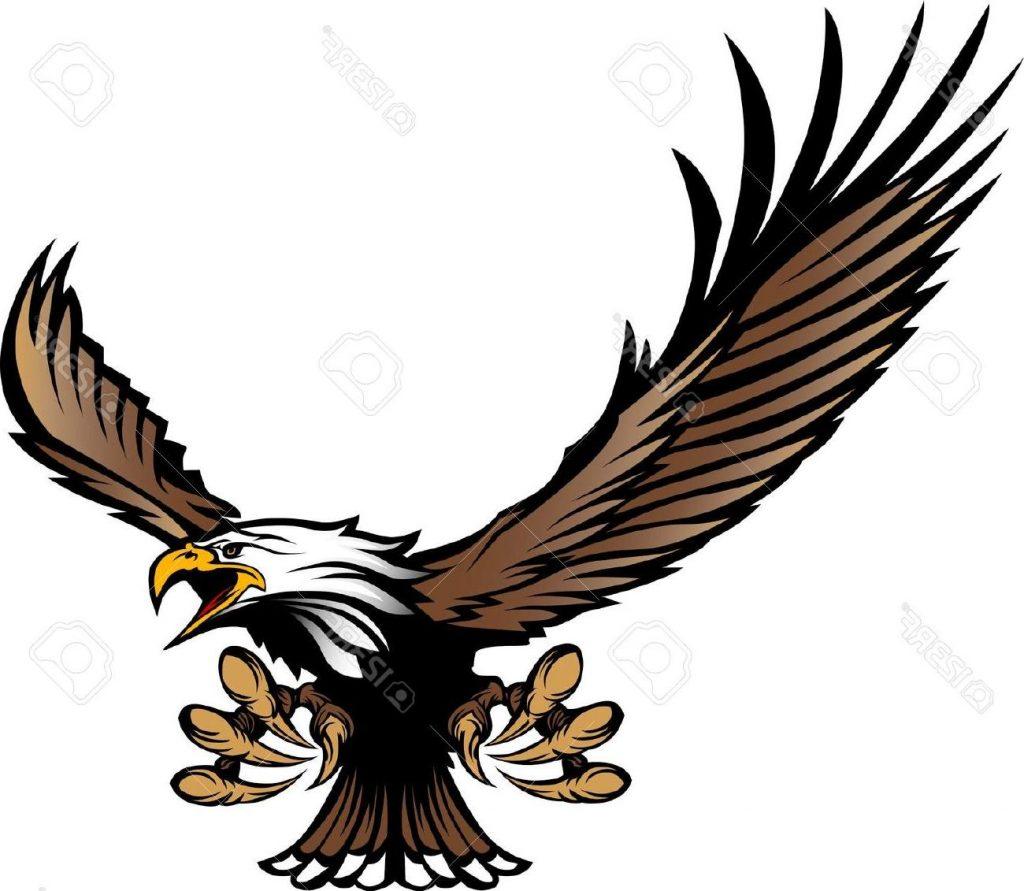 Hd coopers mascot design. Hawk clipart