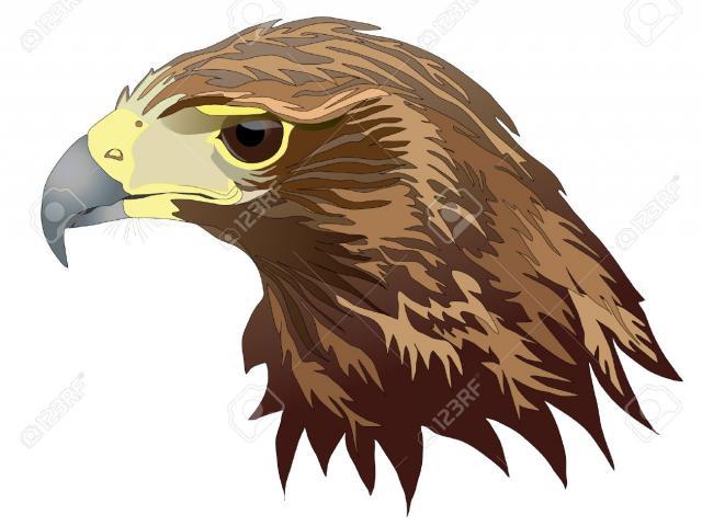 Hawk clipart hawk harris. Free download clip art