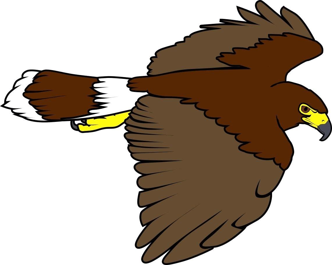 Kisspng drawing line art. Hawk clipart hawk harris