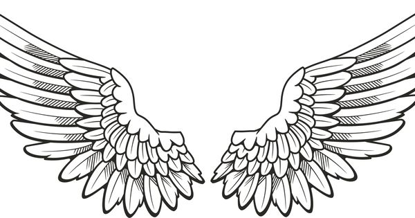 Drawing at paintingvalley com. Hawk clipart wings