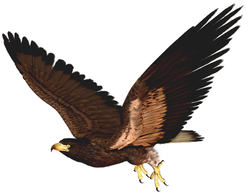 collection of high. Hawk clipart