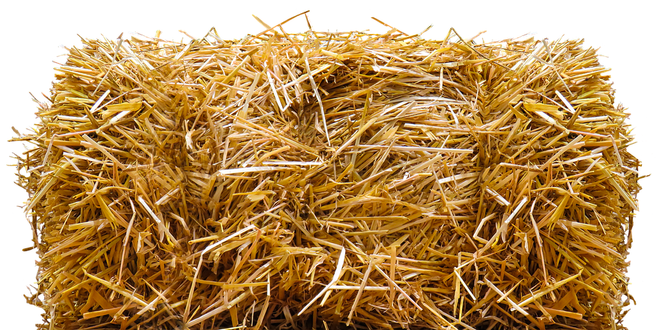 Wheat clipart wheat straw. Forgetmenot vegetables