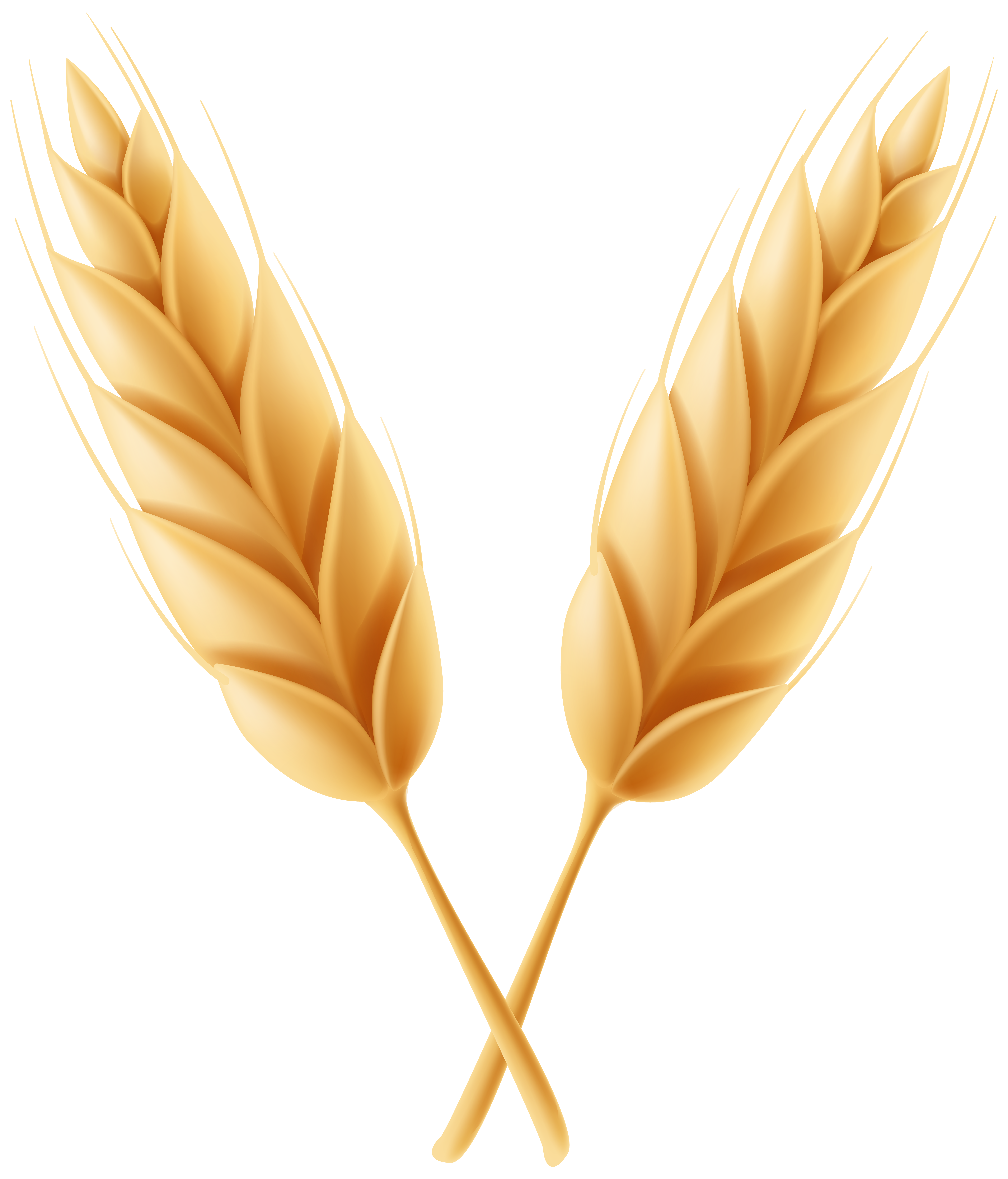 High resolution frames illustrations. Wheat clipart feather