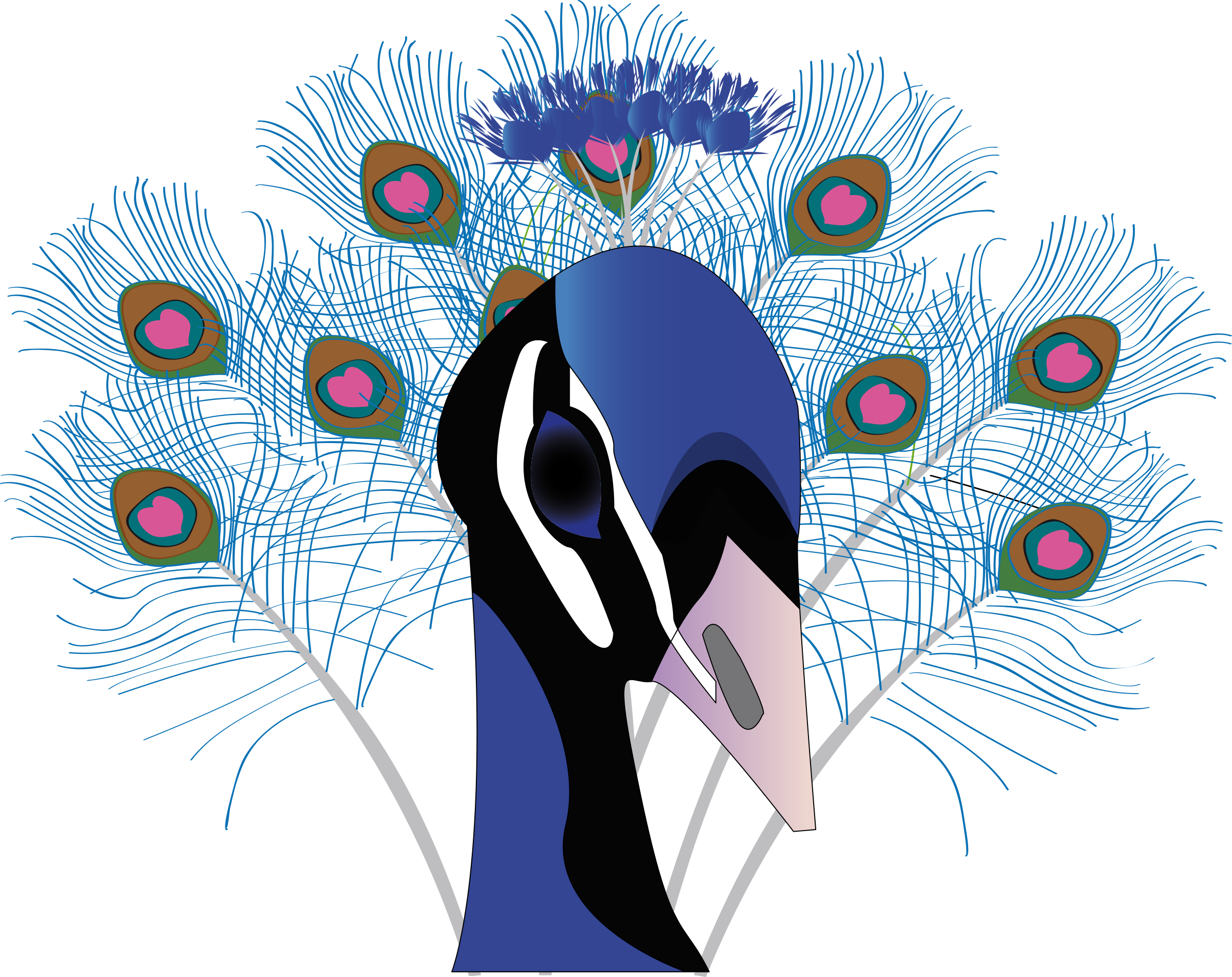 Head clipart peacock. Paon big image png