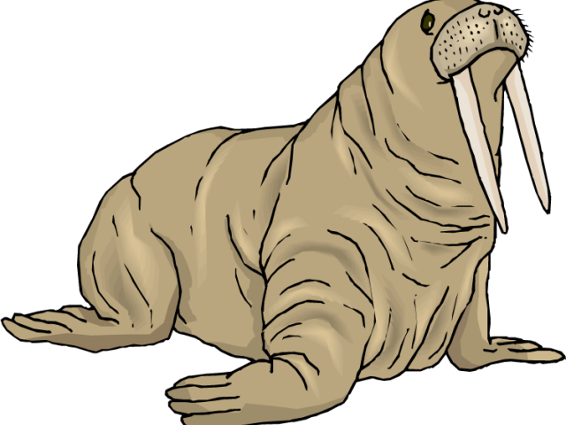 Walrus clipart animal antarctic. Pictures free download clip