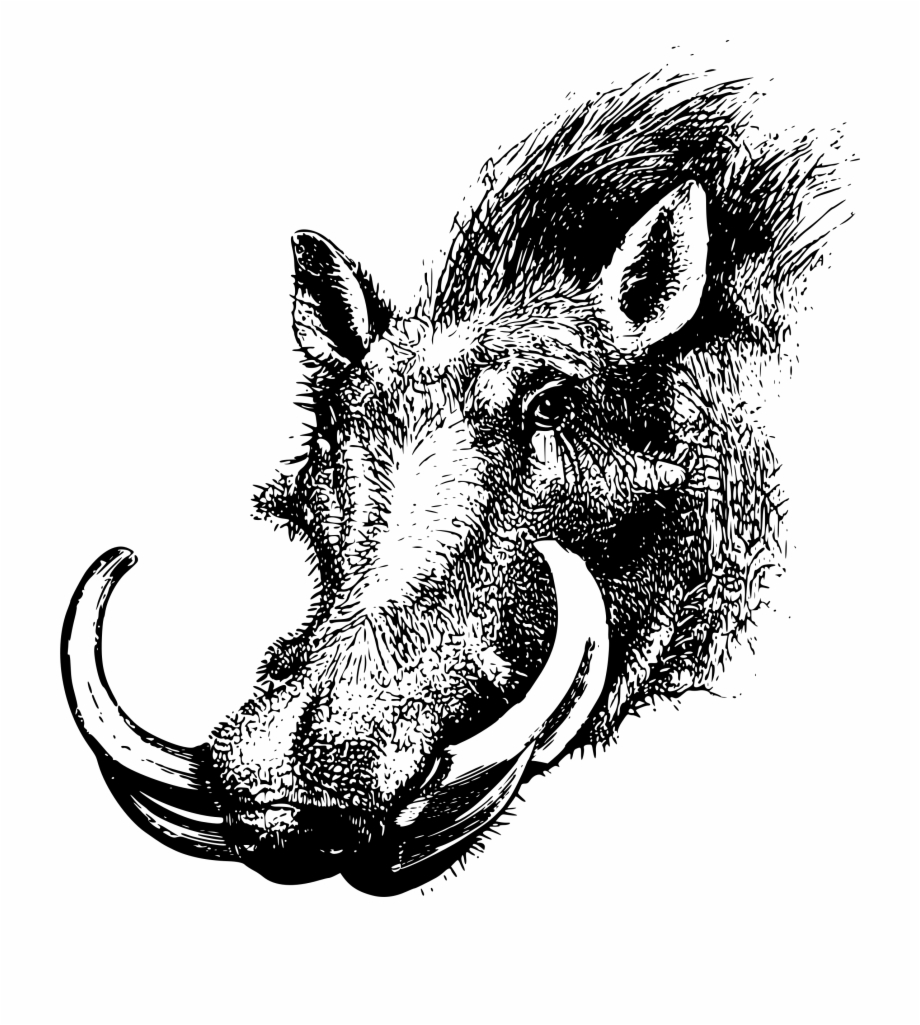 Head clipart warthog. This free icons png