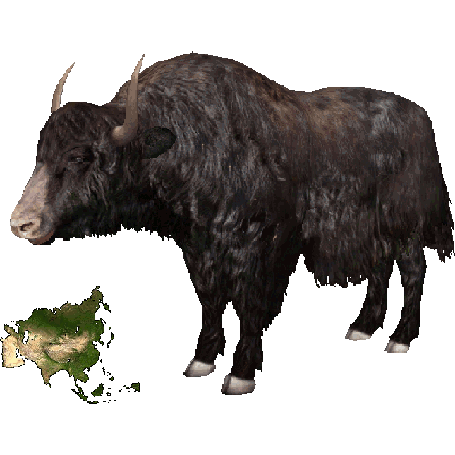 Png transparent images pluspng. Yak clipart musk ox