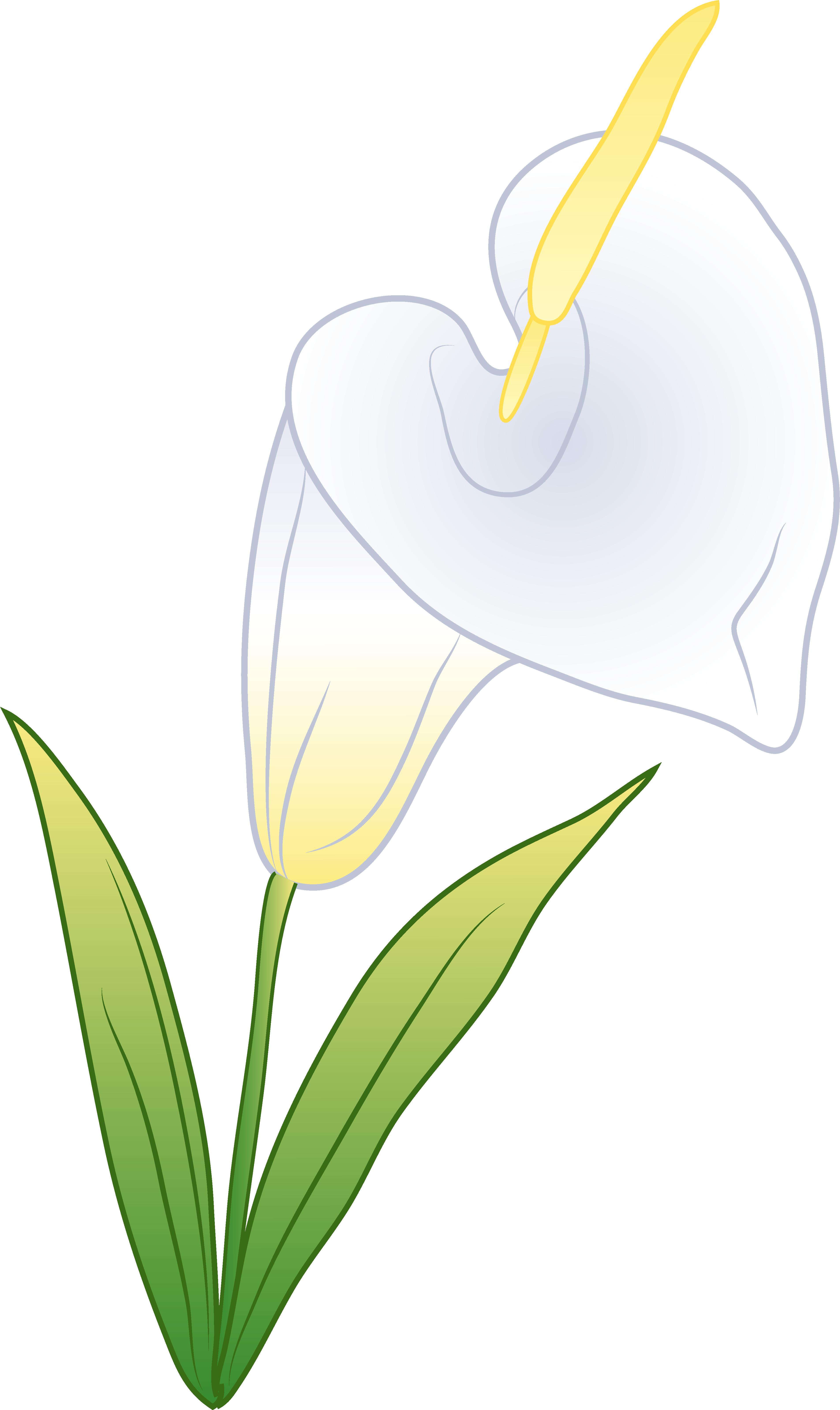 White calla free clip. Lily clipart single