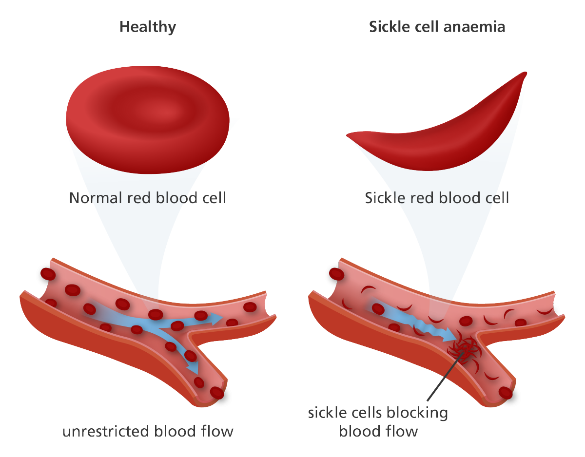 Janiya hook by infographic. Blood cells png
