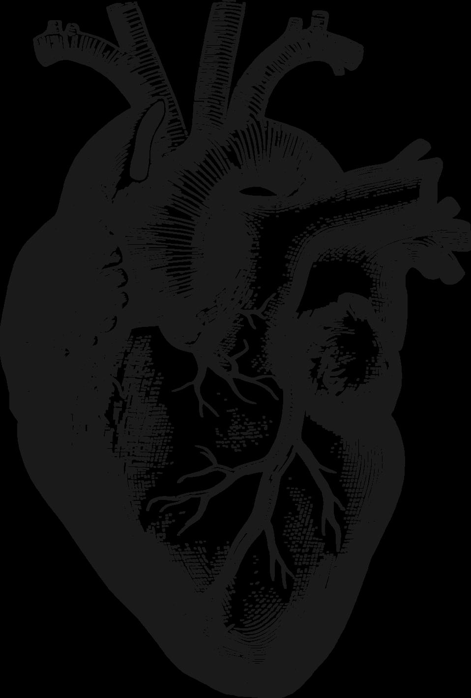 Heart clipart science. Public domain clip art