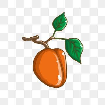 Heat clipart decoration.  summer fruit apricot