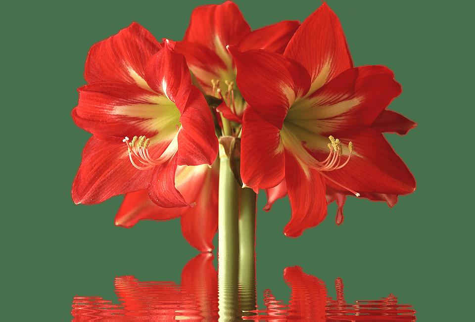 Types of flowers names. Poppy clipart stemmed flower