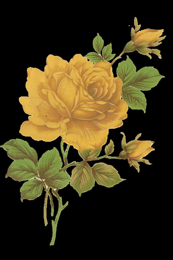 Jinifur yellow rose by. Heaven clipart glories