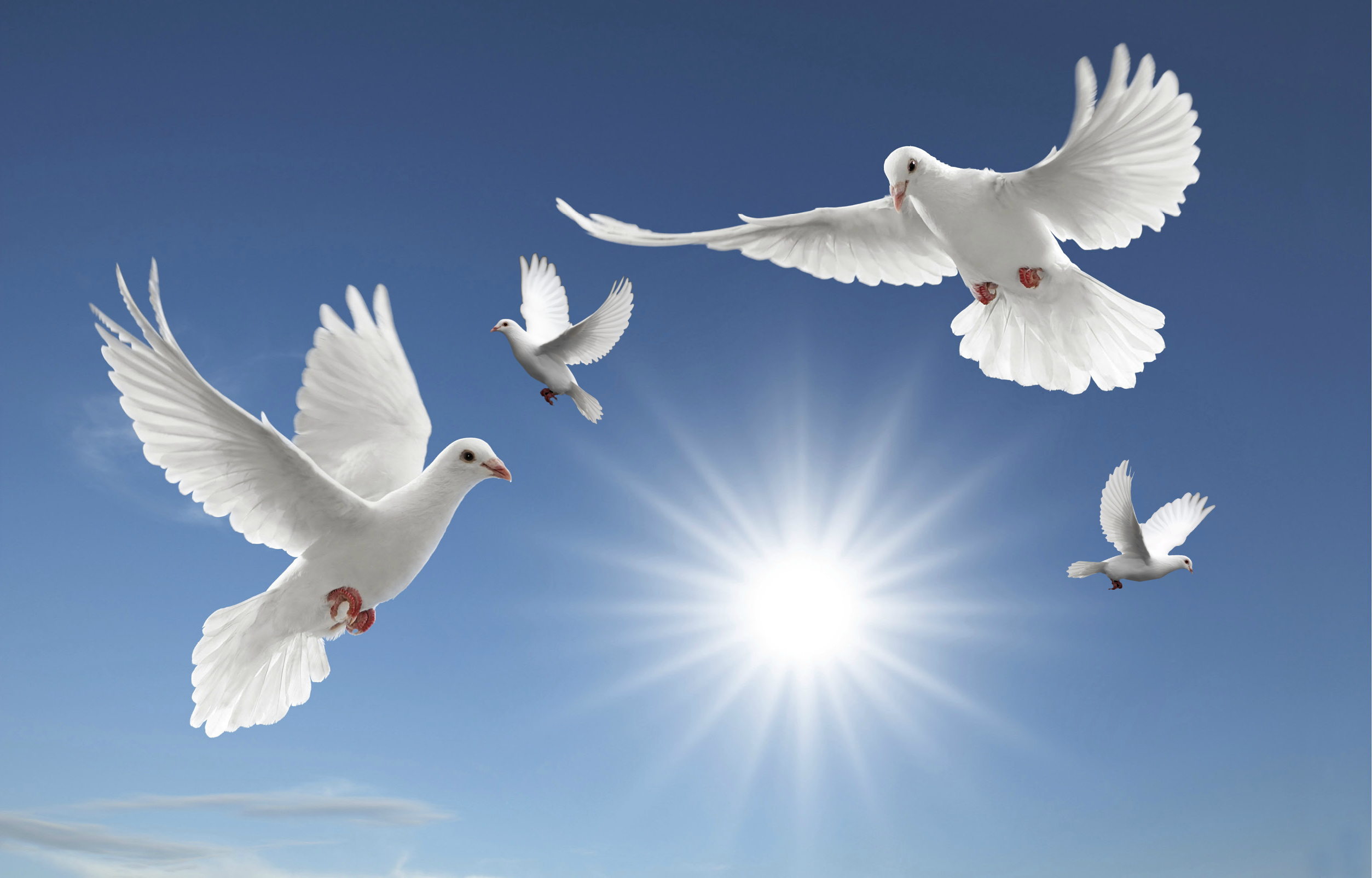 Free dove download clip. Heaven clipart peaceful