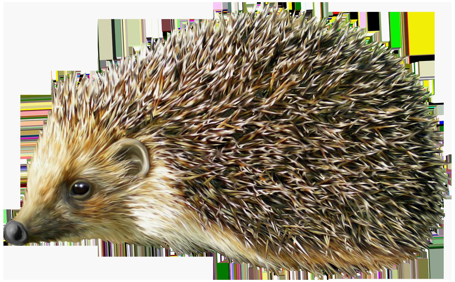 Png best web. Clipart sleeping hedgehog