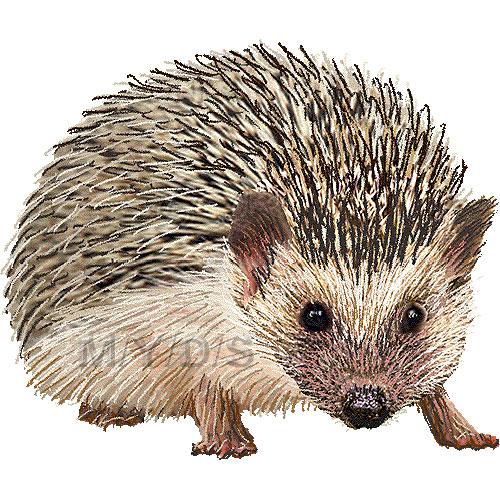 Bampton school hedgehogclipart. Hedgehog clipart