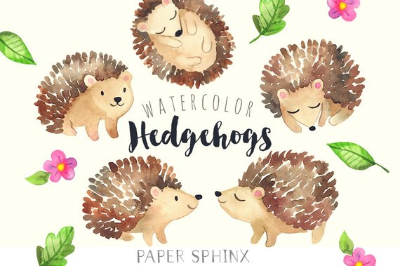 Hedgehog clipart. Watercolor hedgehogs baby forest