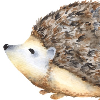 Watercolor porcupine forest animal. Hedgehog clipart