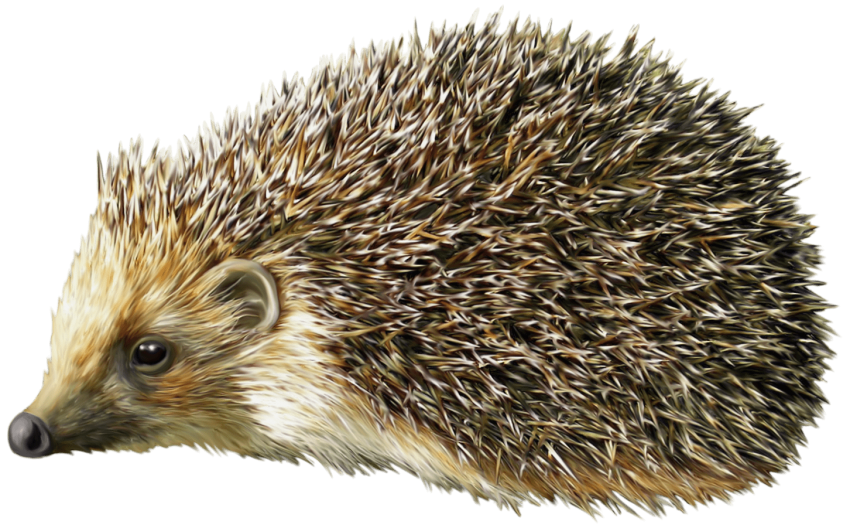 Hedgehog clipart acorn. Png free images toppng