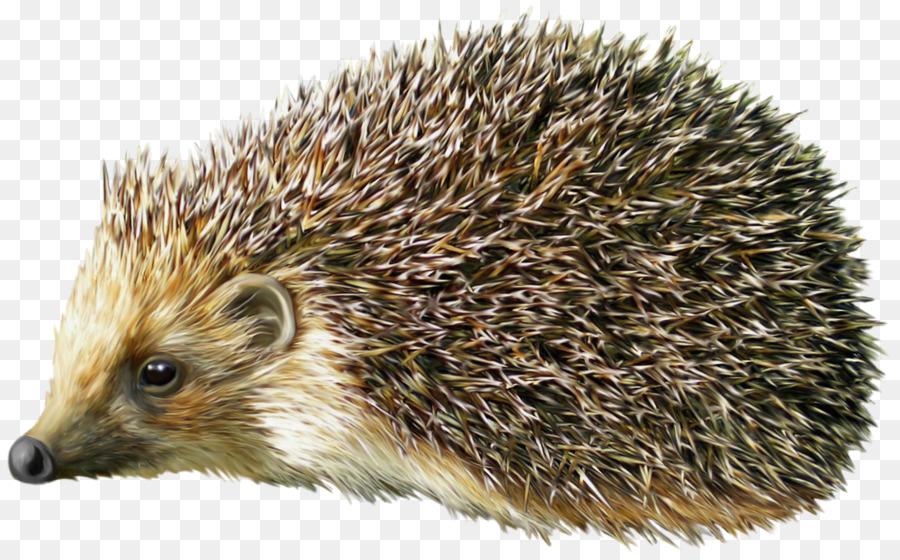 Hedgehog clipart clip art. Png