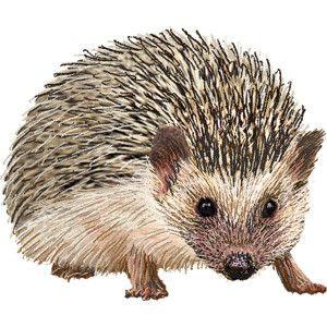 Hedgehog clipart clip art. Graphics free all creatures