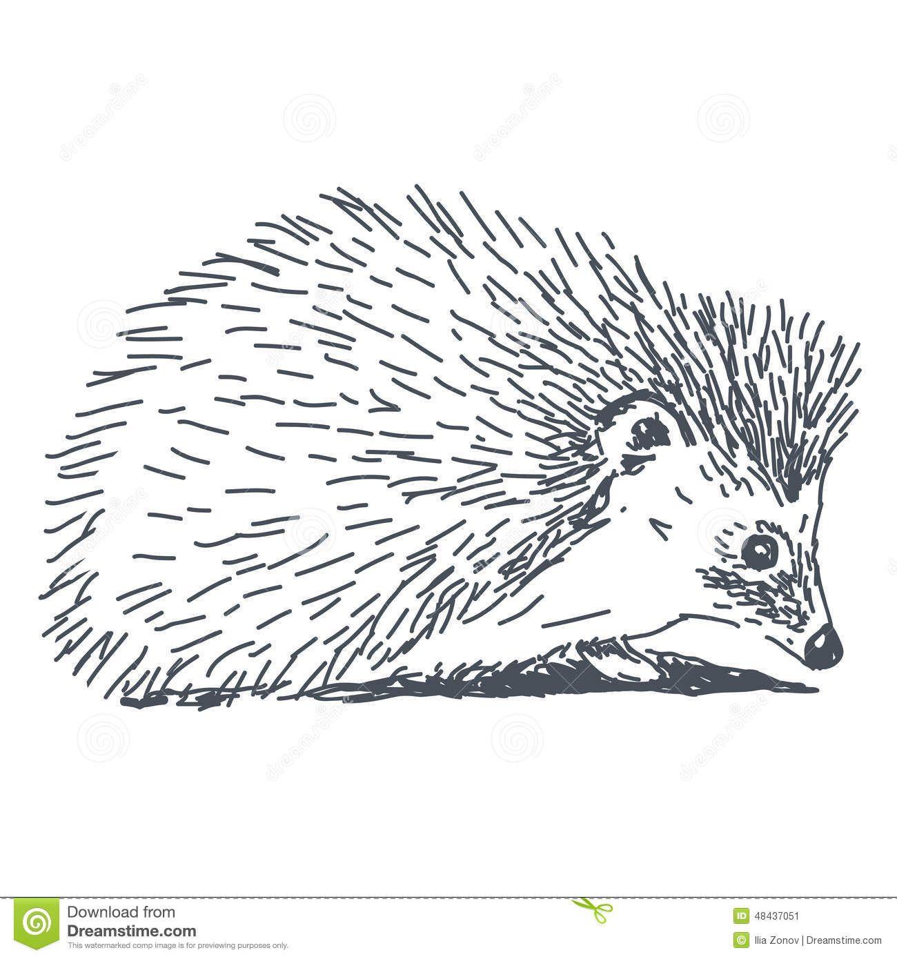 Image result for line. Hedgehog clipart drawn