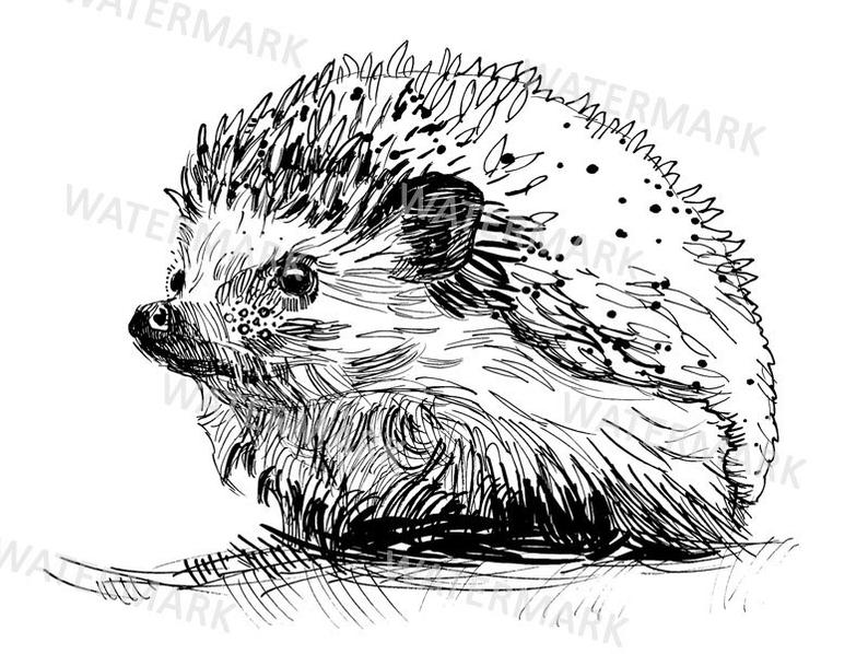 Hedgehog clipart drawn. Hand illustration line art