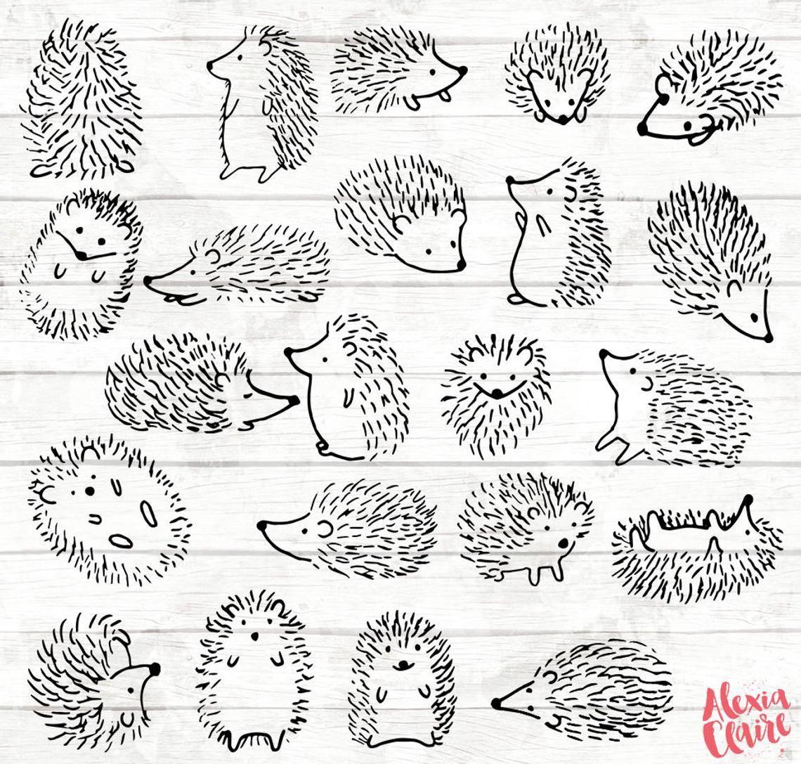 Doodle clip art . Hedgehog clipart drawn