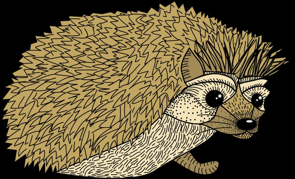 Hedgehog clipart hedgehod. Sydney koffler