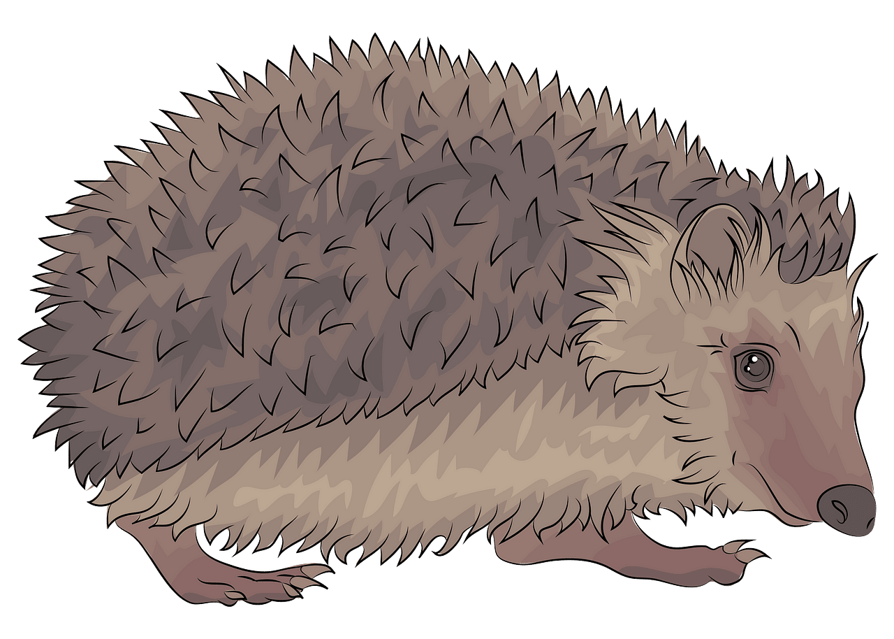 Free download creazilla . Hedgehog clipart hedgehod
