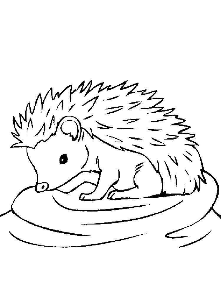 Download coloring book . Hedgehog clipart hedgehog outline