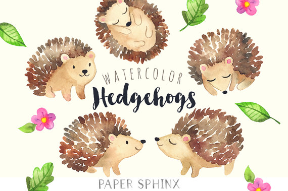 Watercolor hedgehogs baby forest. Woodland clipart hedgehog