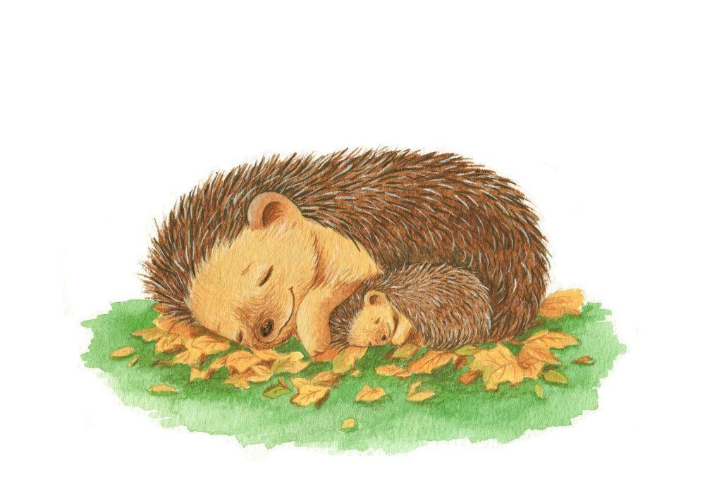 Hedgehog clipart sleeping. Hedgehogs mummy and baby