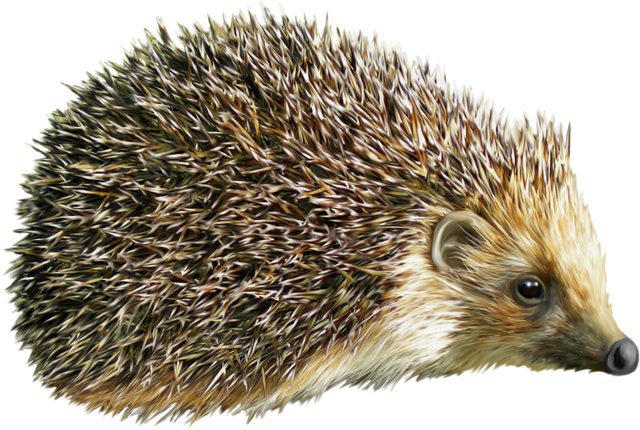 Hedgehog clipart transparent background. Png image web icons