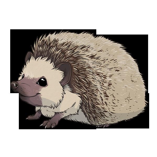 Hedgehog clipart transparent background. Png image free