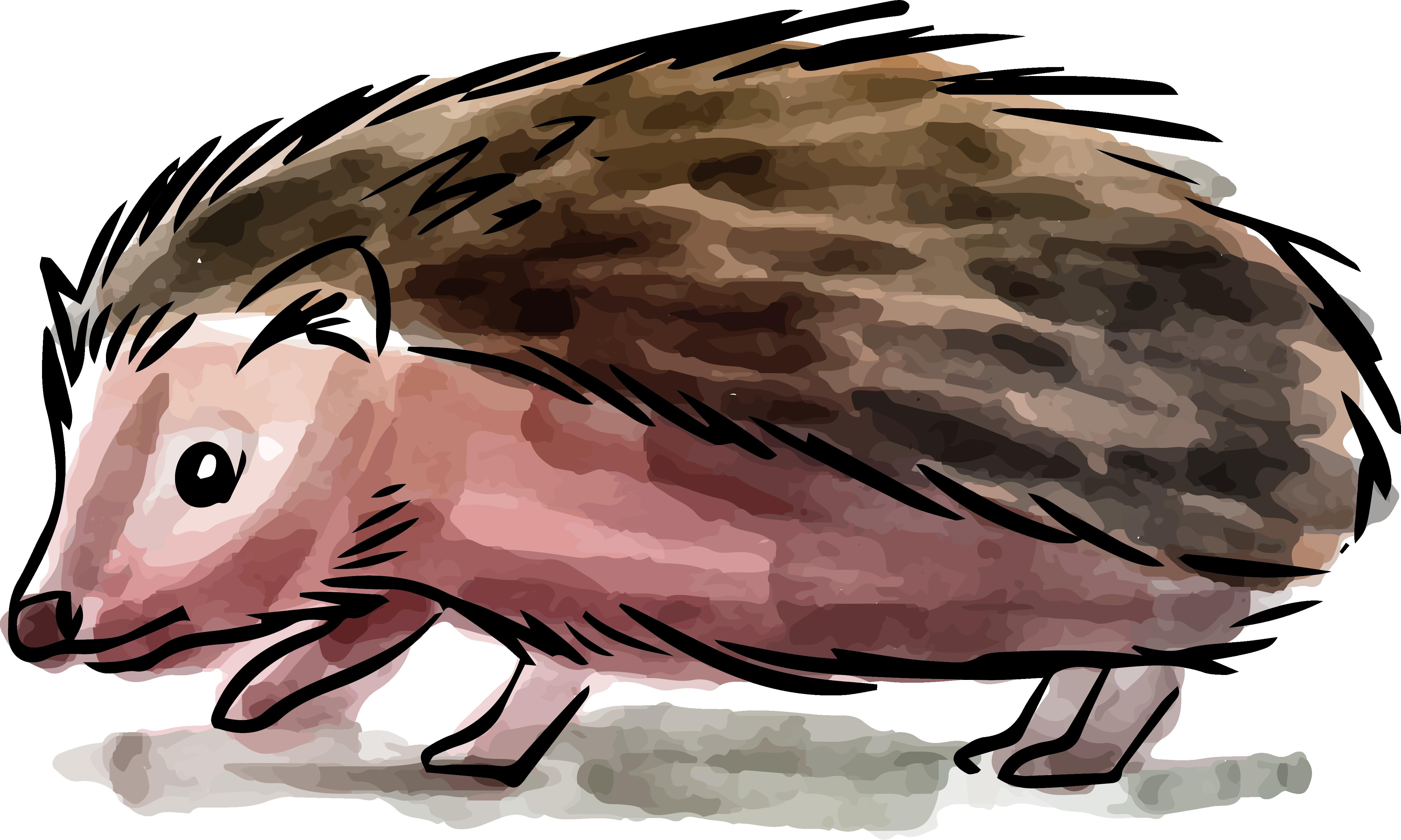 Hedgehog clipart watercolor. El erizo de pintura