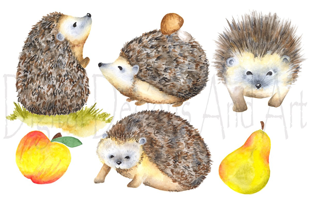 Hedgehog clipart watercolor.